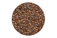 Солод  шоколадный Chocolate malt  EBC 800-1000 (Viking Malt)